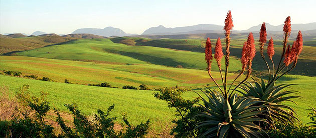 Flora of the Overberg
