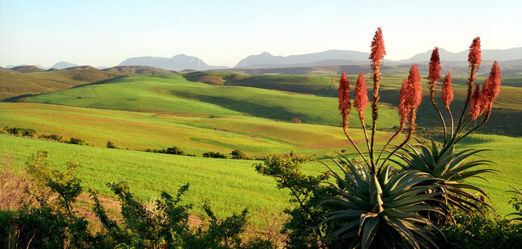 Accommodation, Activities in the Overberg, Western Cape, South Africa, www.overberg-info.co.za