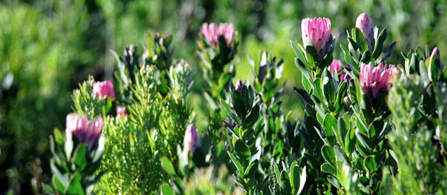 Bettys Bay, in the Western Cape, South Africa, Overberg, accommodation in bettys bay